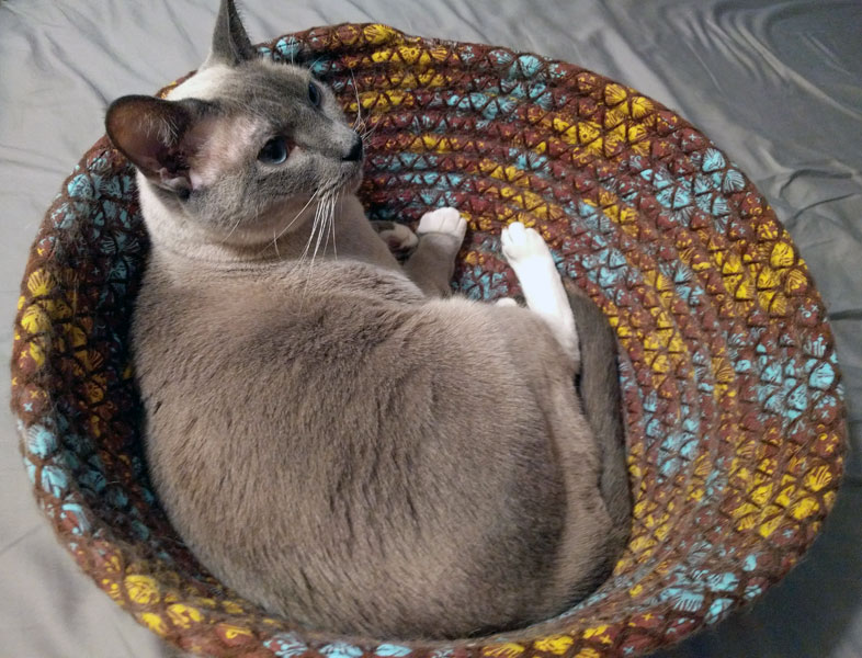 Scarlett in a basket